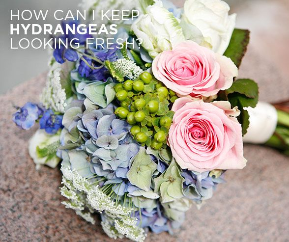 can i put fresh flowers on a wedding cake see colin s answer how can i keep hydrangeas looking 12360