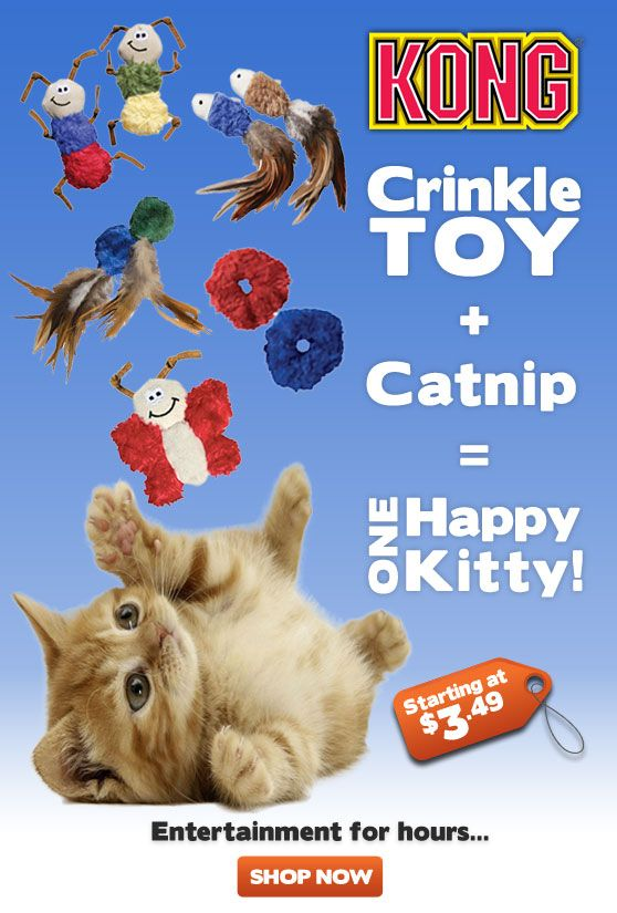 Sign Up At Renspets Com Happy Cat Flyer Kitty