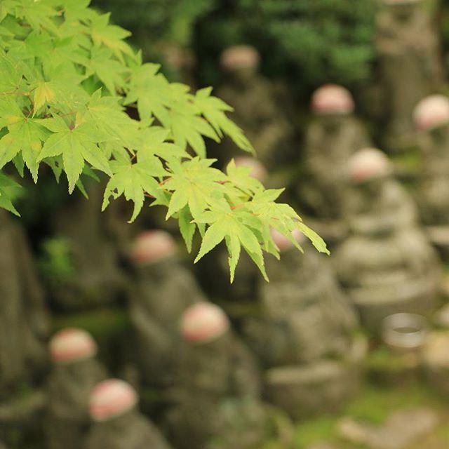 ただいま(    )ノ  堤防決壊とか大変な事になっとるΣдlll 1人でも多く救助されますように  #宮島 #広島 #大聖院 by shimada71
