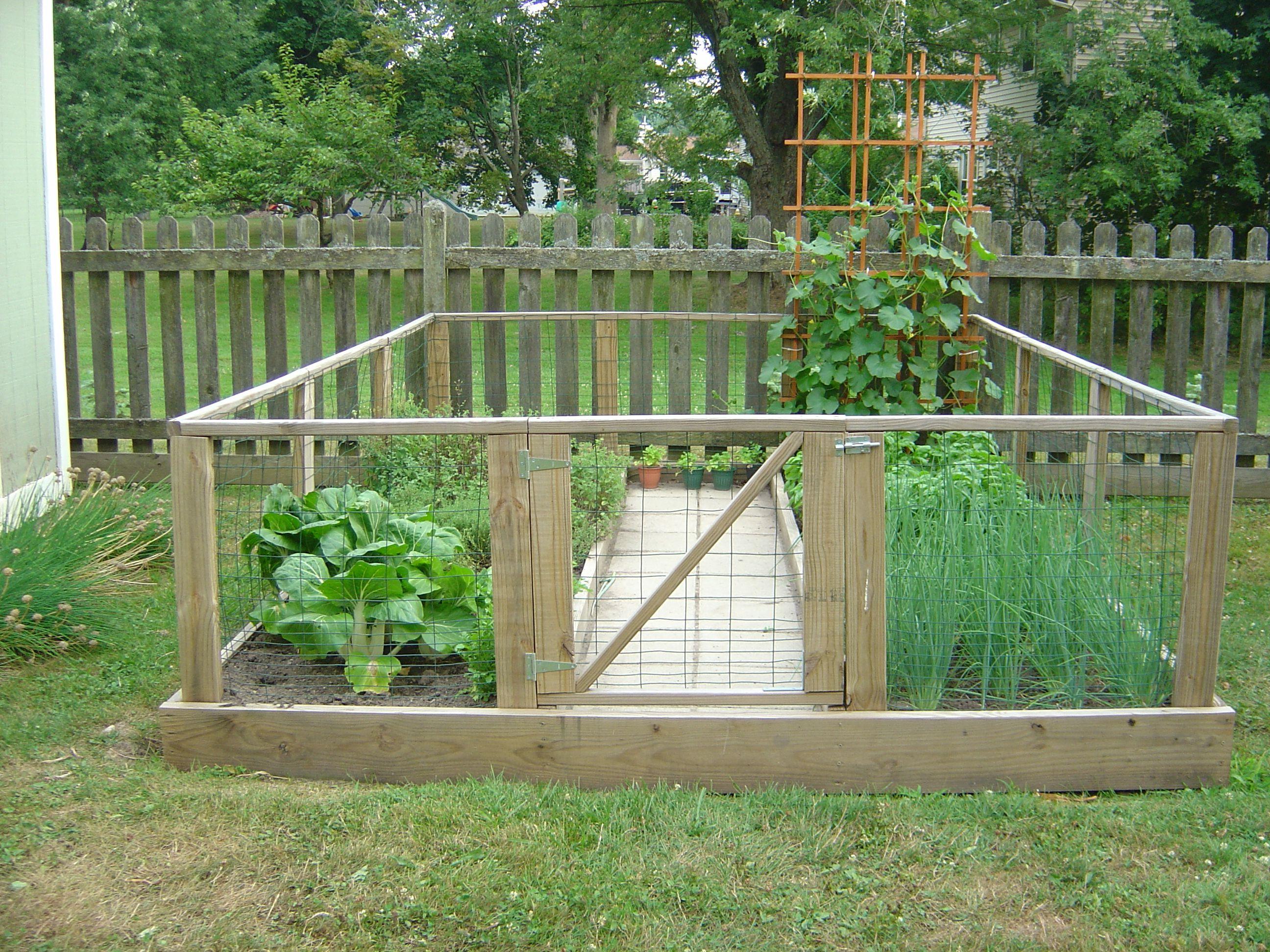 Dog Proof Veggie Garden I Want To Do This Cultivos En Casa