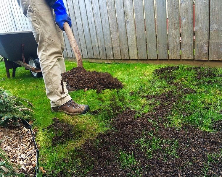 Learn How Much Topsoil Is Needed To Grow Good Grass How To Guides Tips And Tricks Mosquito Plants Plants Lantana Plant