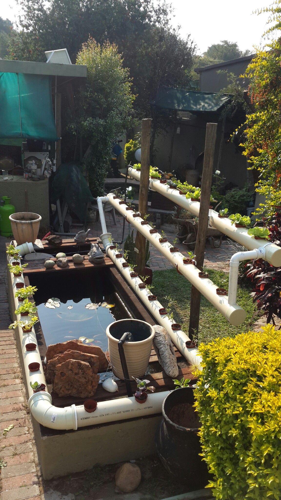Koi pond combined with vegetable and herbs