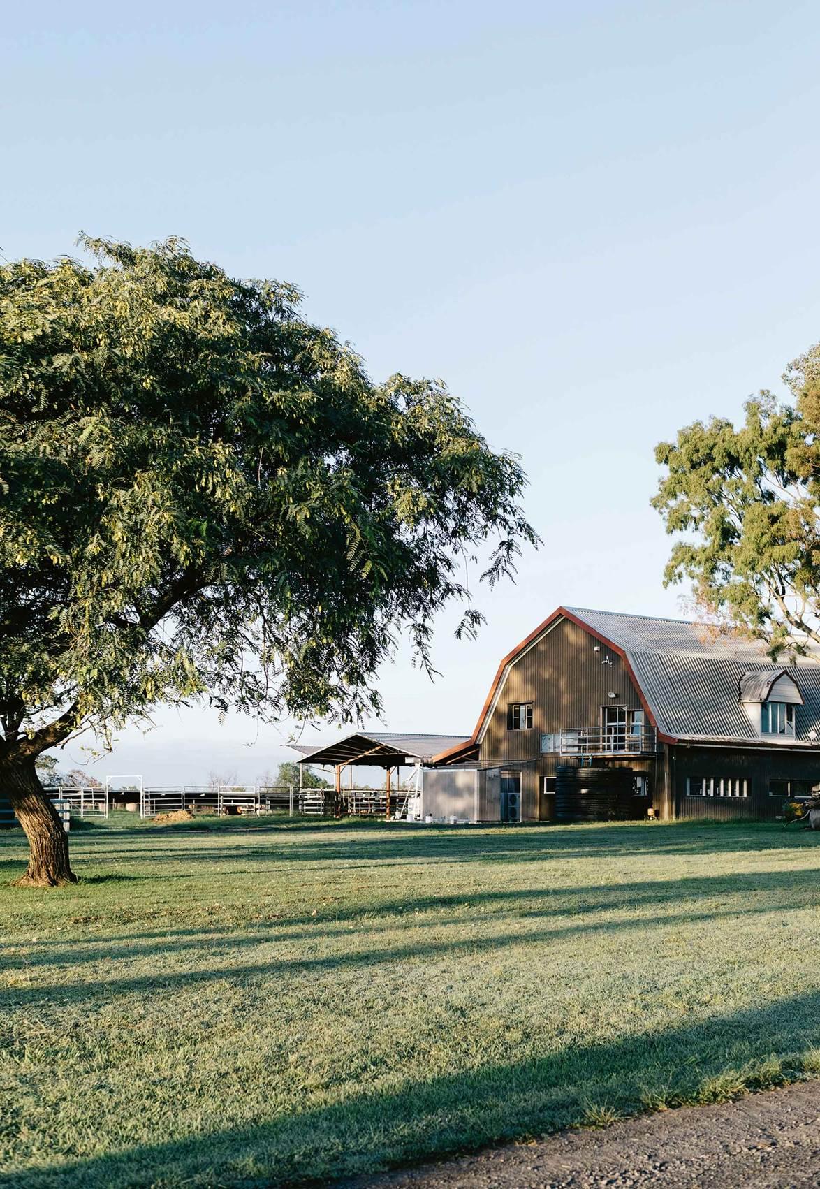 Camel milk Queensland: Inside an award-winning camel dairy farm