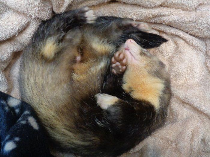 Rspca Little Valley Animal Shelter Exeter Devon Adopt A Ferret Animal Shelter Animals Dog Adoption