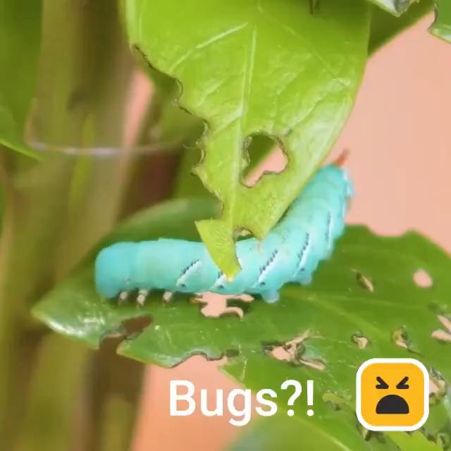 Amazing Plant Hacks Video In 2020 Plant Hacks Plants Garden Projects