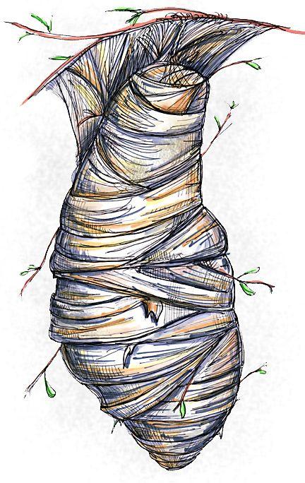Butterfly Cocoon Drawing Butterfly Cocoon Drawi...