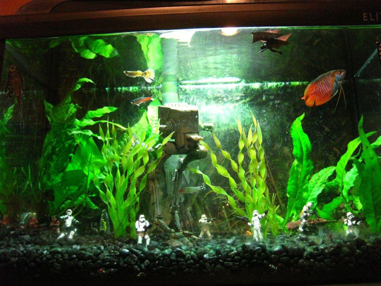 Endorquarium Aquaria Aquarium Star Wars Bedroom Fish Tank