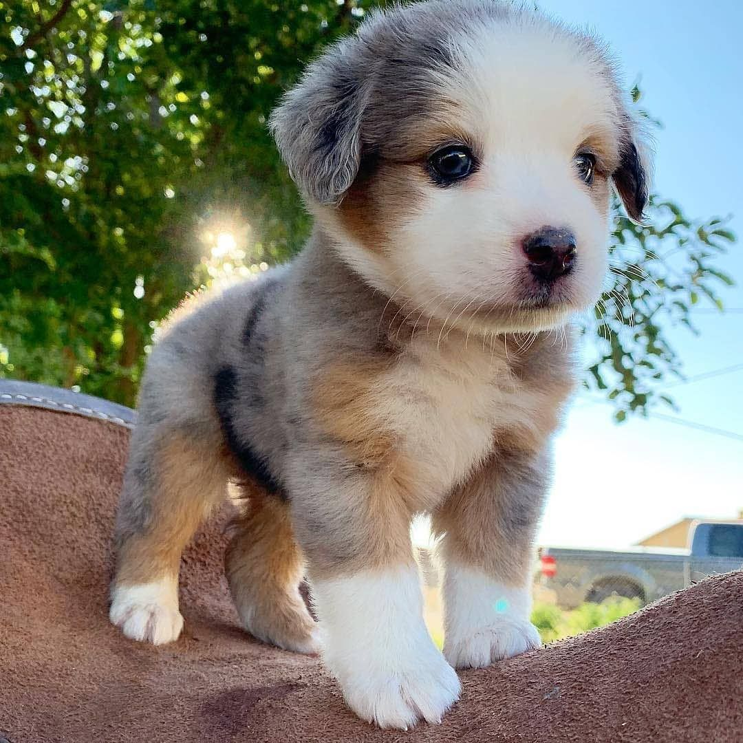 Wishing You A Floofy Day Https Ift Tt 34yzvyx Super Cute Puppies Baby Animals Super Cute Cute Little Puppies