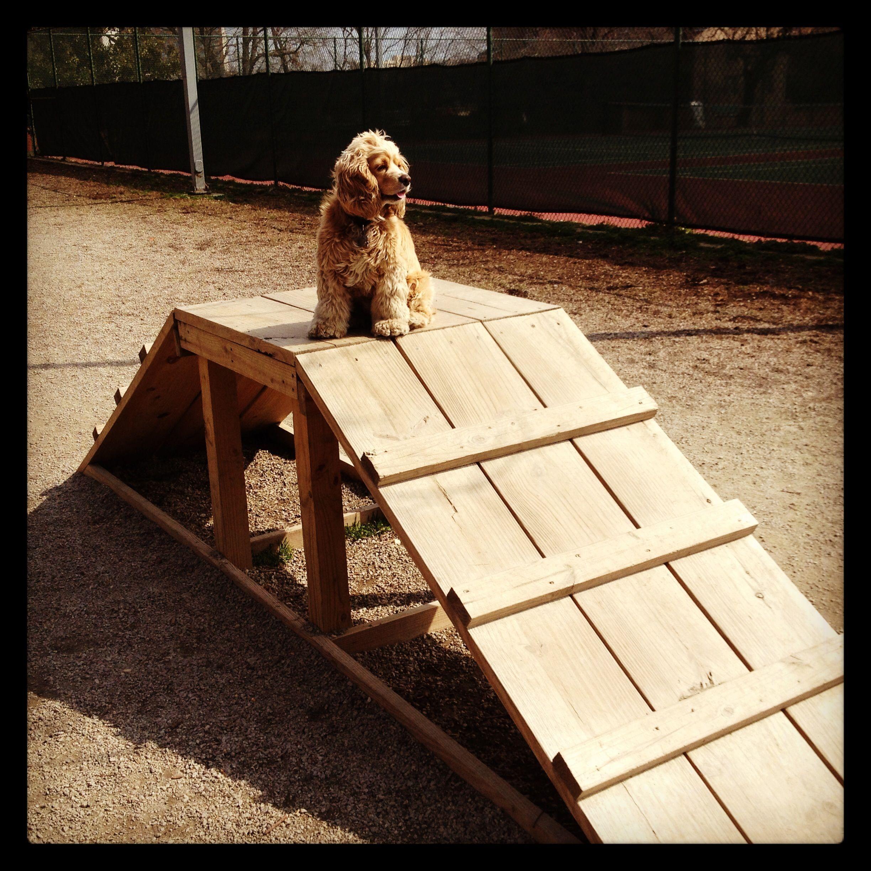looks easy to make... #PlayinDogs   Dog playground, Dog ...