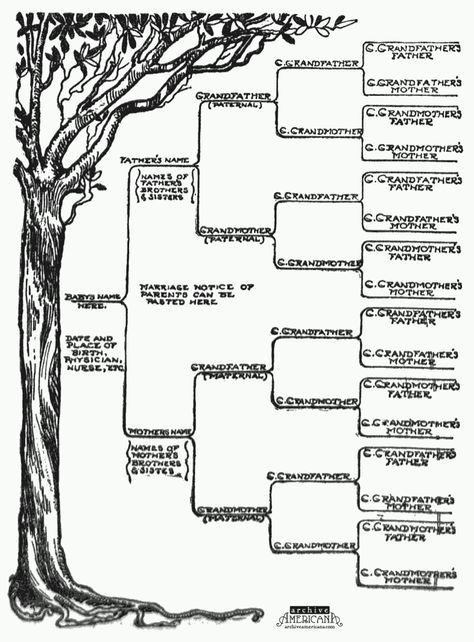 Free Family Tree Template Printable Foe Word  Family Tree