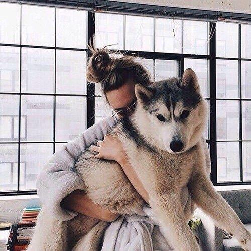 Resultado de imagen para hug husky