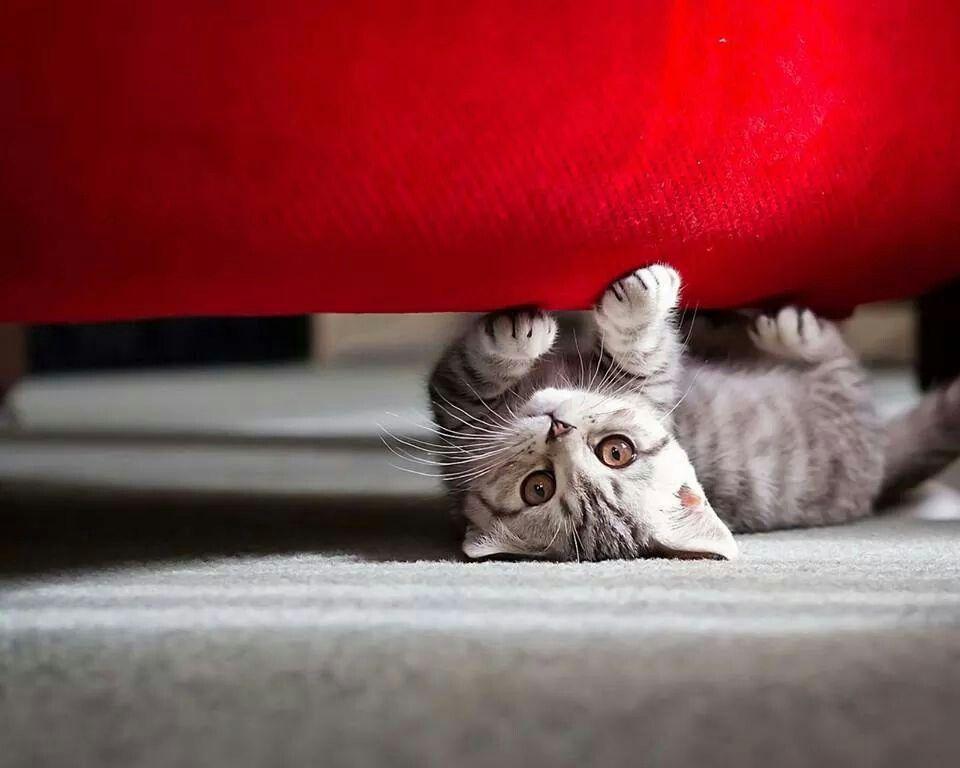 Il gatto in rosso!