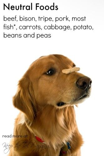 Chinese Medicine Neutral Foods Raw Dog Food Do You Have A Dog