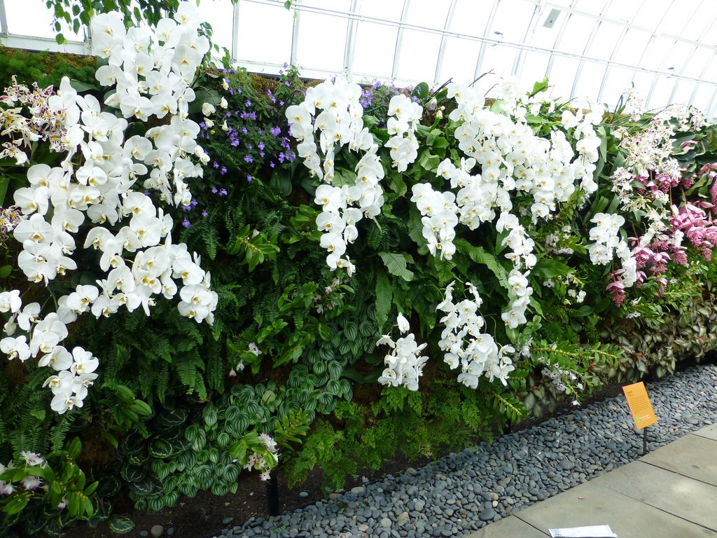 Vertical garden design with orchids space saving backyard landscaping - Orchid Show Vertical Garden Wall 1 Cane Orchids Flickr Photo Sharing