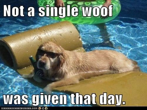 e73d41b56148b4845c3679a4c1caa3f8 he doesn't give a woof {swimming pool meme funny humor dog
