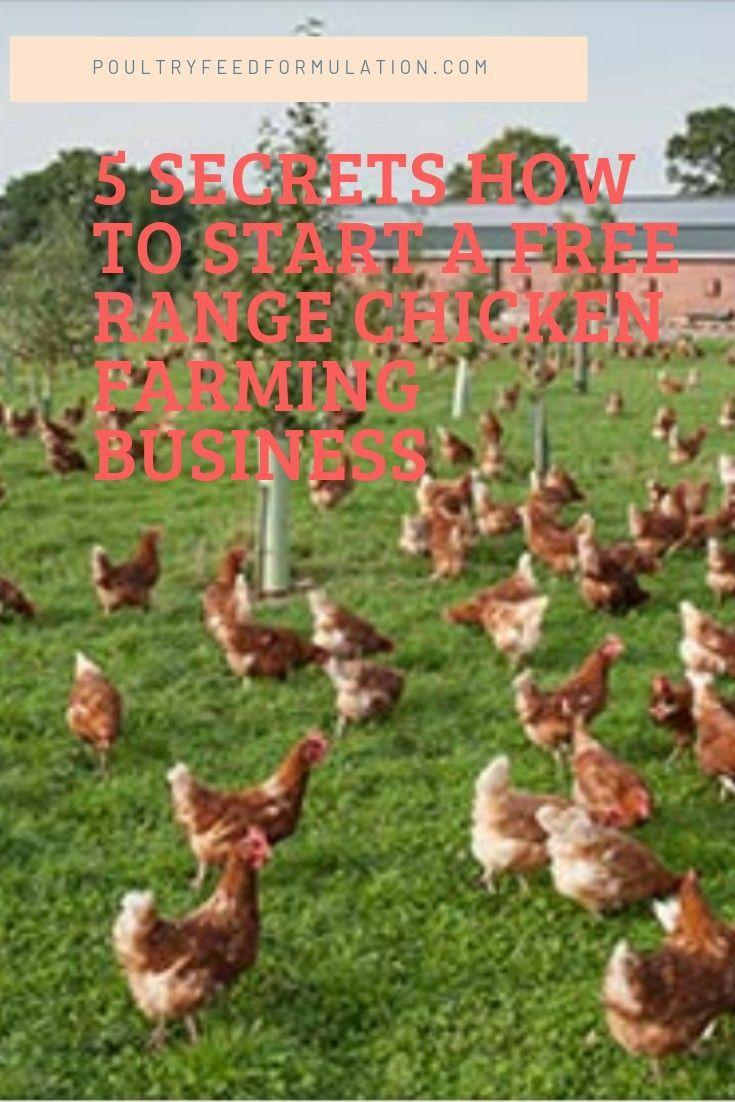 5 secrets how to start a successful free range chicken