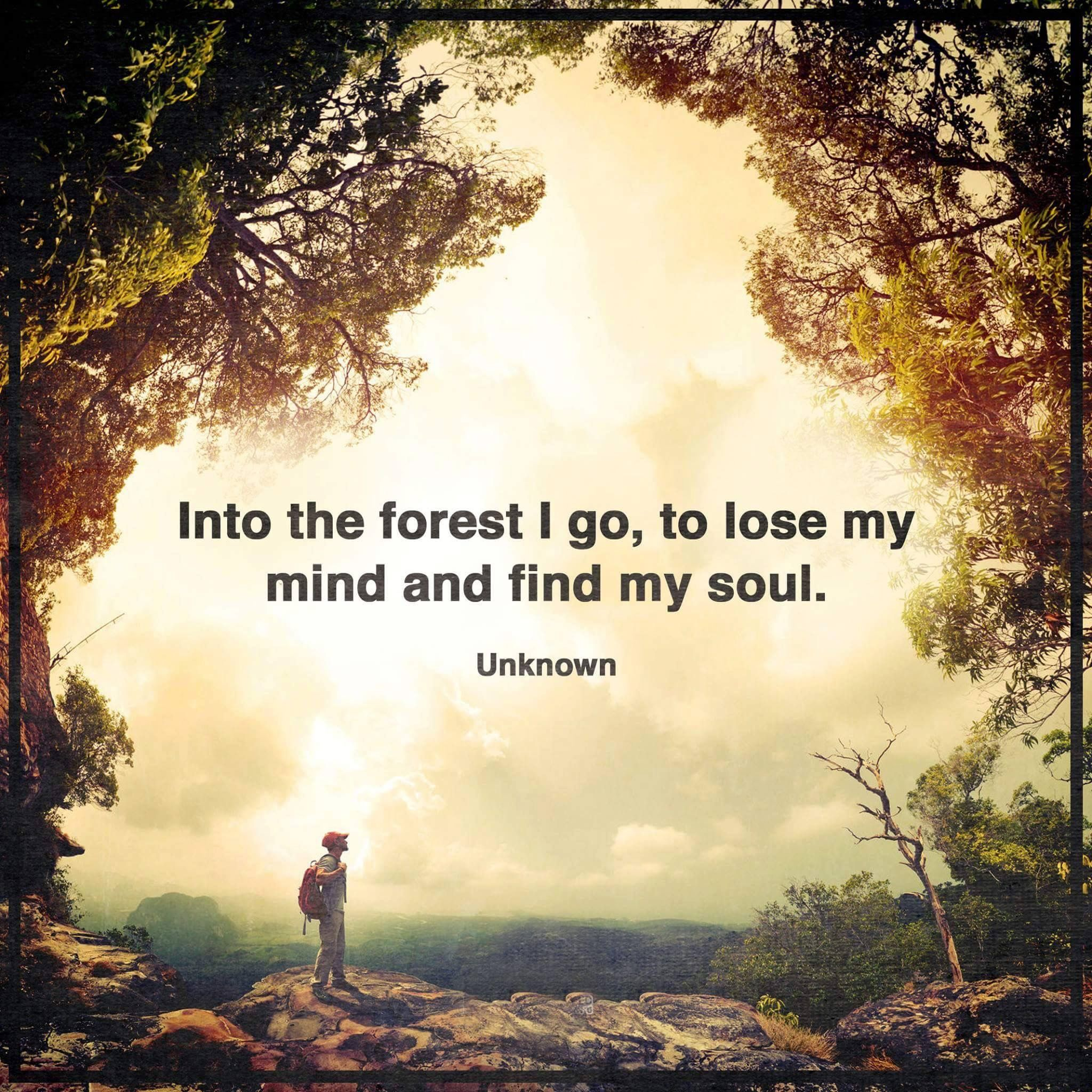 Pin By Pauline Lindley On Nature Quotes Into The Woods Quotes