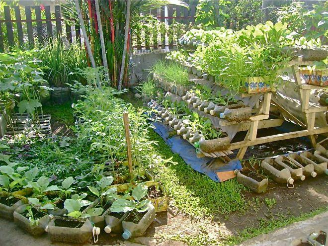 e73e690bf8660dea746b14f9bd09725c - Bio Intensive Gardening In The Philippines