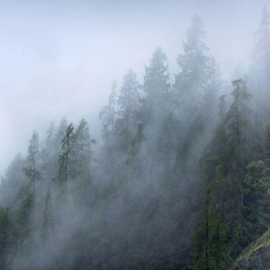 Trees under mist by Julio López Saguar, via 500px