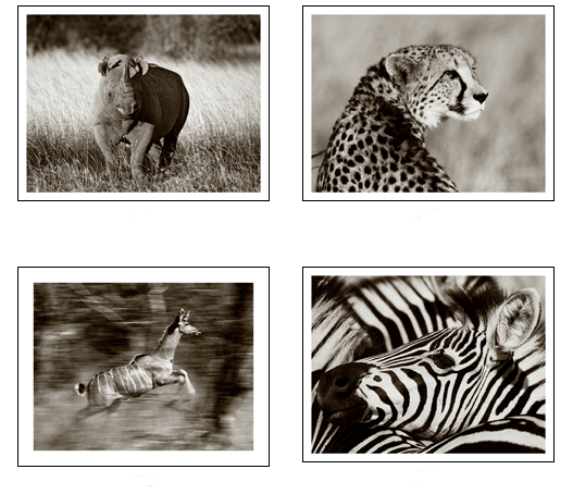Set of Twelve Black and White Signed Safari Animal Framed Prints-FREE SHIPPING! from www.wellappointedhouse.com #homedecor #decorate #wallart #wallbrackets #plateholders