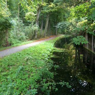 Begin van het bos begint met een donkere sloot aan de kant van de Bezuidenhoutseweg