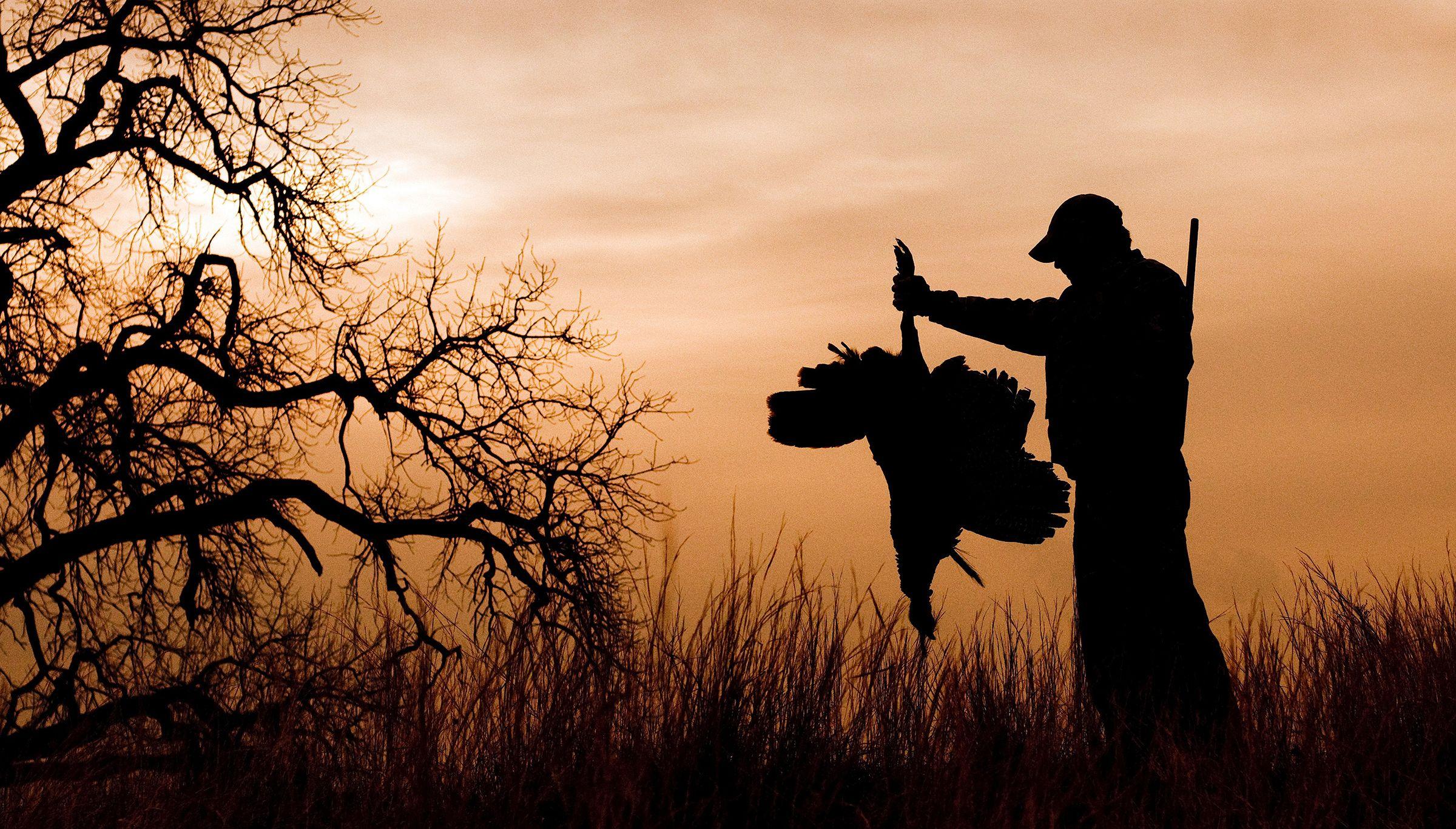 How do you hunt pressured turkeys john hafner photo