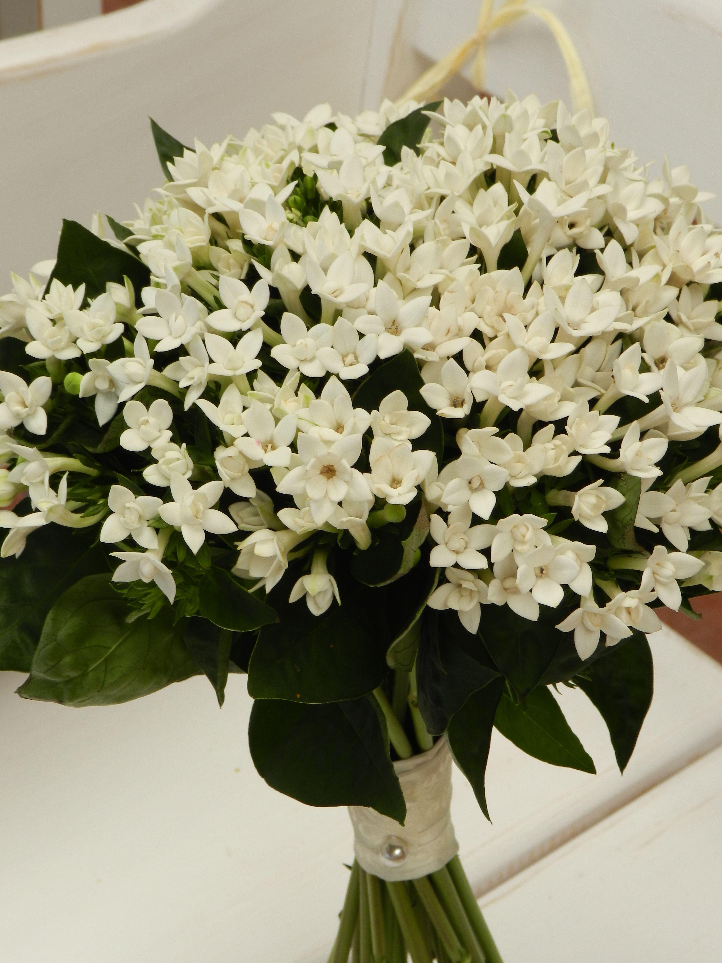 Ramo de bouvardia bouquet pinterest wedding bouquets wedding ramo de bouvardia izmirmasajfo