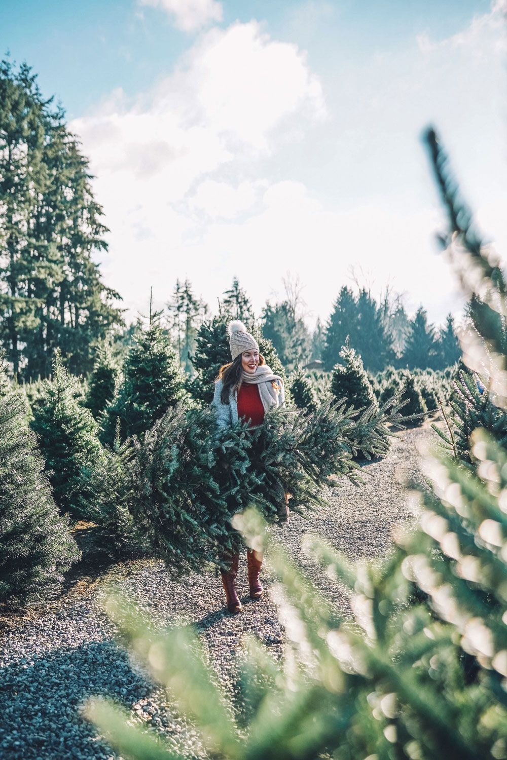 Christmas Tree Farms Vancouver Christmas Tree Farm Christmas Tree Christmas Aesthetic