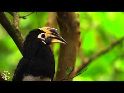 Video Fauna Alta Definicion Naturaleza Todo Mail