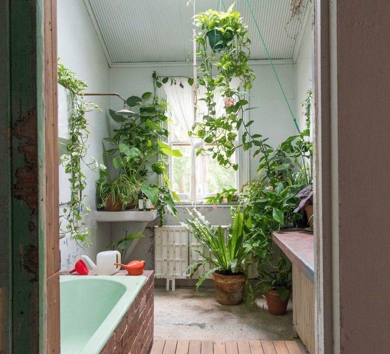 Wlasna Dzungla W Lazience Forumkwiatowe Pl Bathroom Flowers Bathroom Plants Amazing Bathrooms