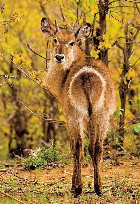 Earthandanimals Animals Animals Wild African Animals
