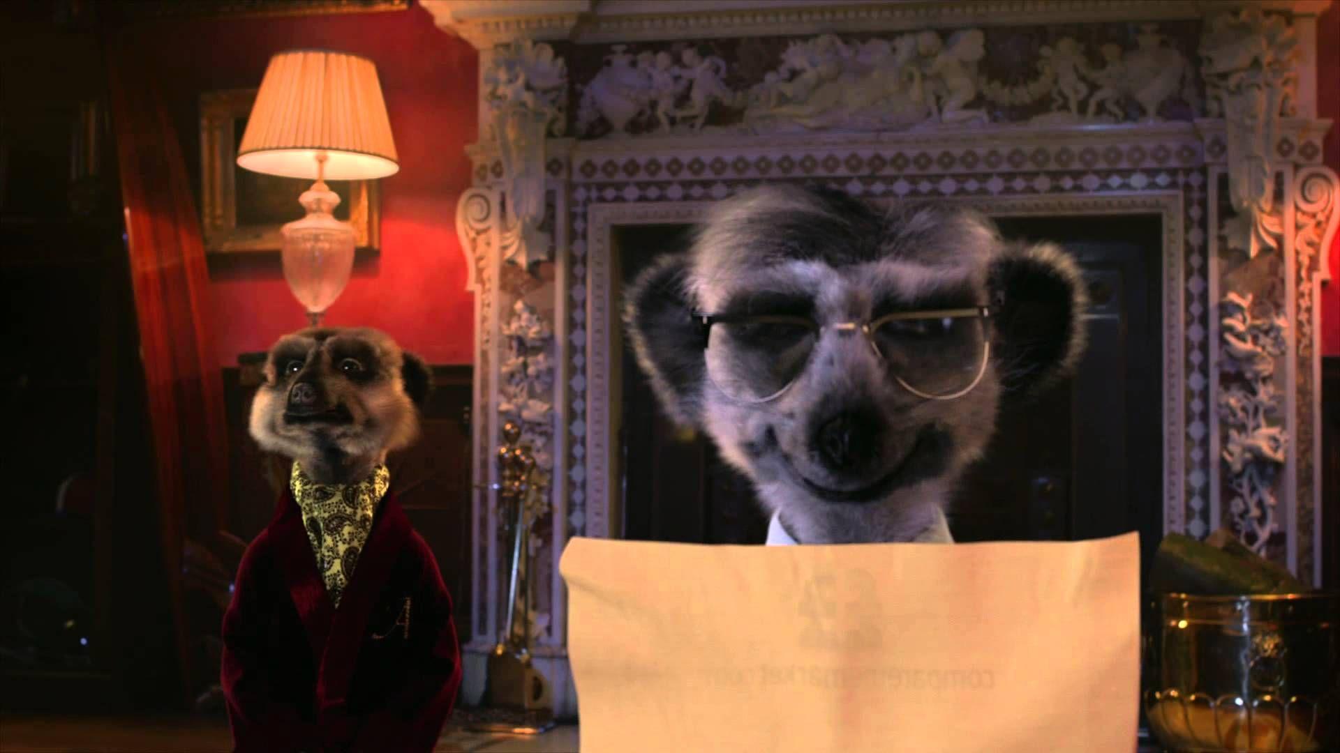 Uninvited Guest Rock Compare The Meerkat Advert Meerkat