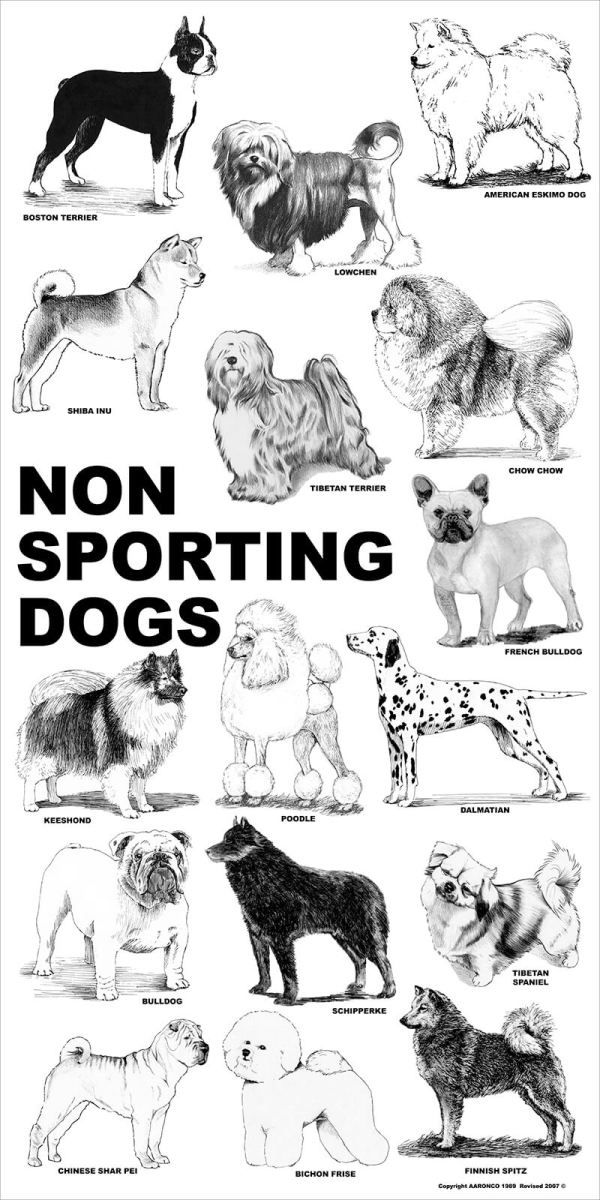 Aaronco Poster Non Sporting Dogs Sporting Dogs Dog Poster