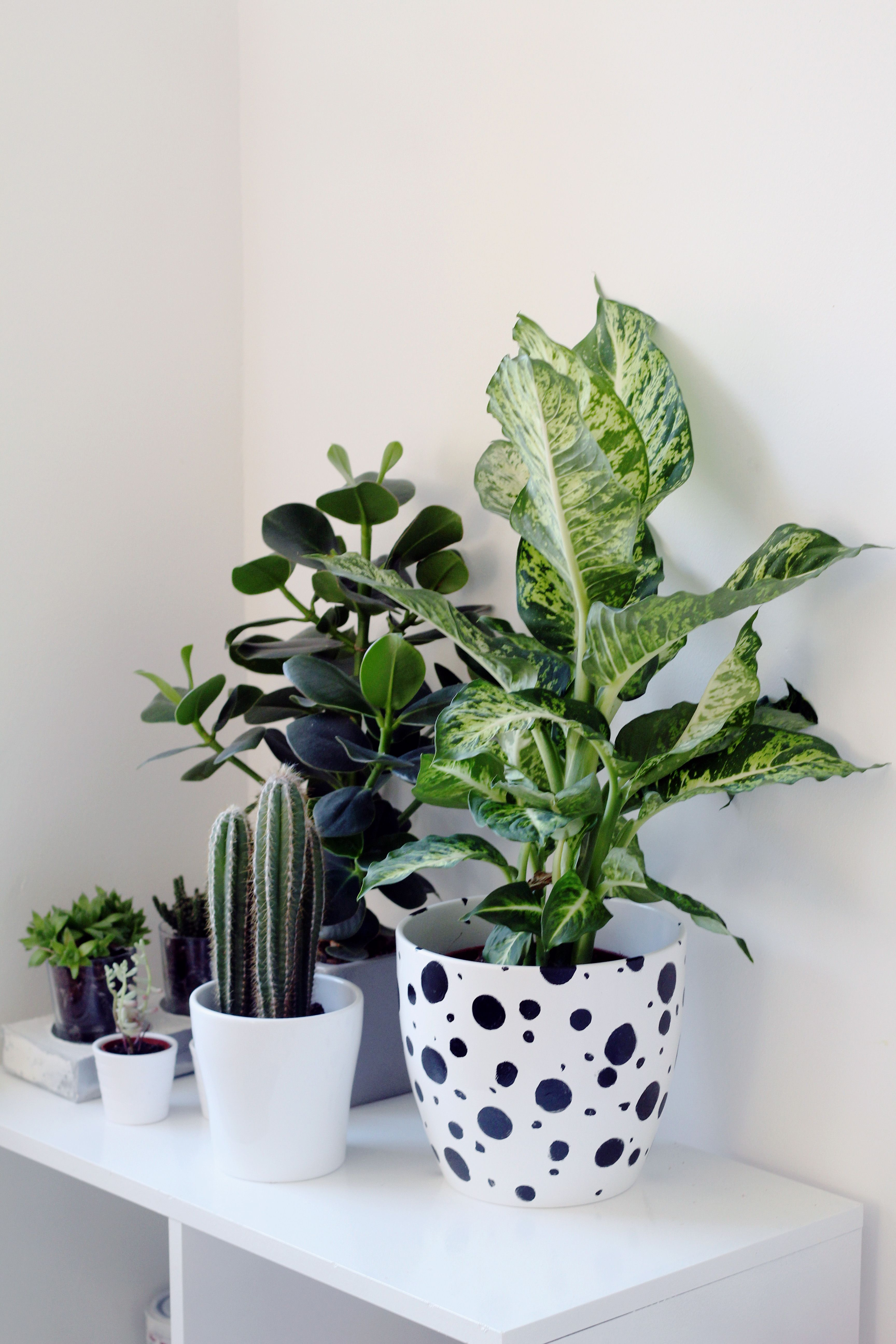 Potted Plants And The Necessary Spring Care: Dalmatian Spotted Planter