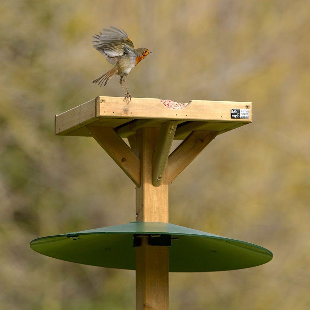 Bird Table Squirrel Baffle Squirrel Baffle Bird Feeders