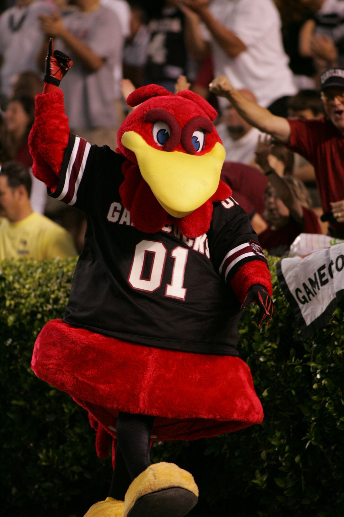 2012 Cocky Storms The Field With His Legendary Sandstorm Dance To Rally Usc Tailgaters And Swimmers Al Gamecocks Football Gamecocks South Carolina Gamecocks