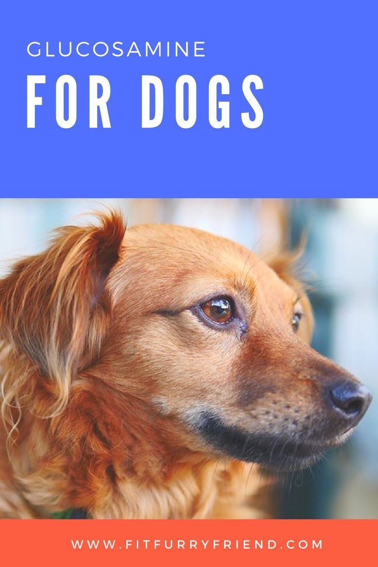 Glucosamine For Dogs Dogs Dog Glucosamine Dog Health Tips