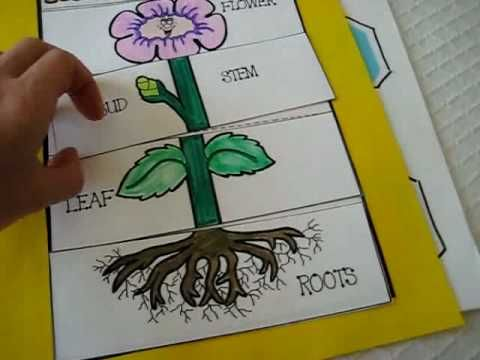 Pin By Crystal Walker On Homeschool Ideas Plant Activities Plant Science Parts Of A Plant