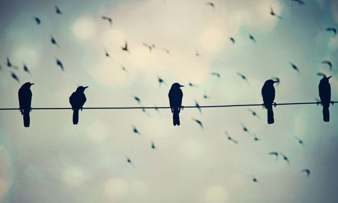 Five Birds On A Wire Photo Hd Wallpaper Photo Facebook Cover Desktop Background Nature