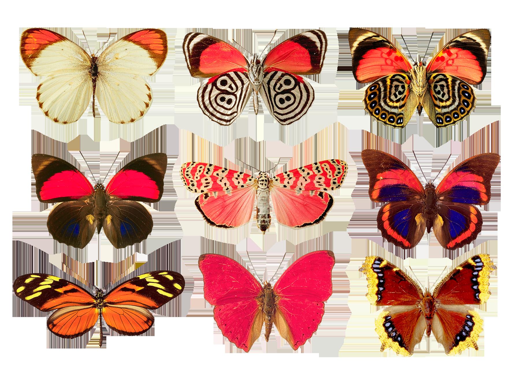 butterflies png by absurdwordpreferred deviantart com on
