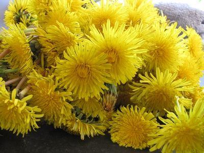 Mai: Zeit für einen würzigen Löwenzahnblüten Sirup. Hier gibt es die Anleitung und das Rezept dazu.