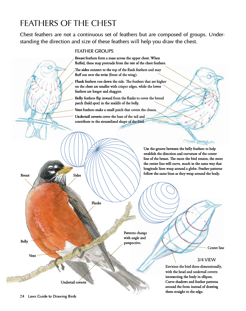 LAWS GUIDE TO DRAWING BIRDS | drawing | Pinterest | Feathers, Bird ...