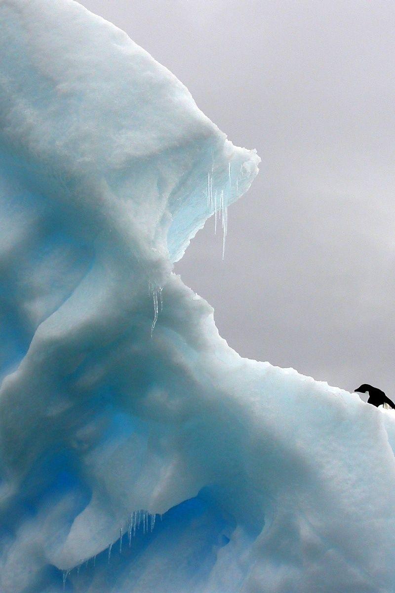 Free stock photo of iceberg, antarctica, penguins