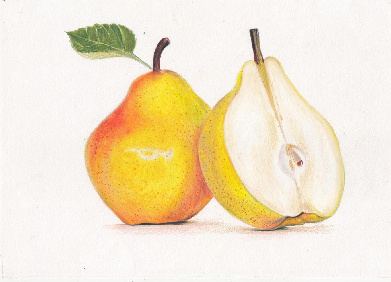 Drawing a Pear- Prismacolor colored - 128.2KB
