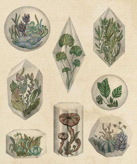The Scientific and Anatomical Illustrations of Katie Scott: katie_scott_4_20111219_1442149096.jpg