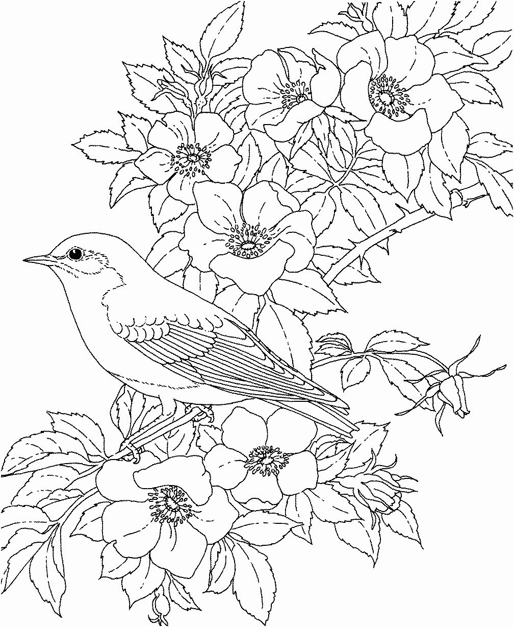 Cute Coloring Pages Of Animals Beautiful Coloring Pages Birds And Flowers Bird Coloring Pages Spring Coloring Pages Flower Coloring Pages