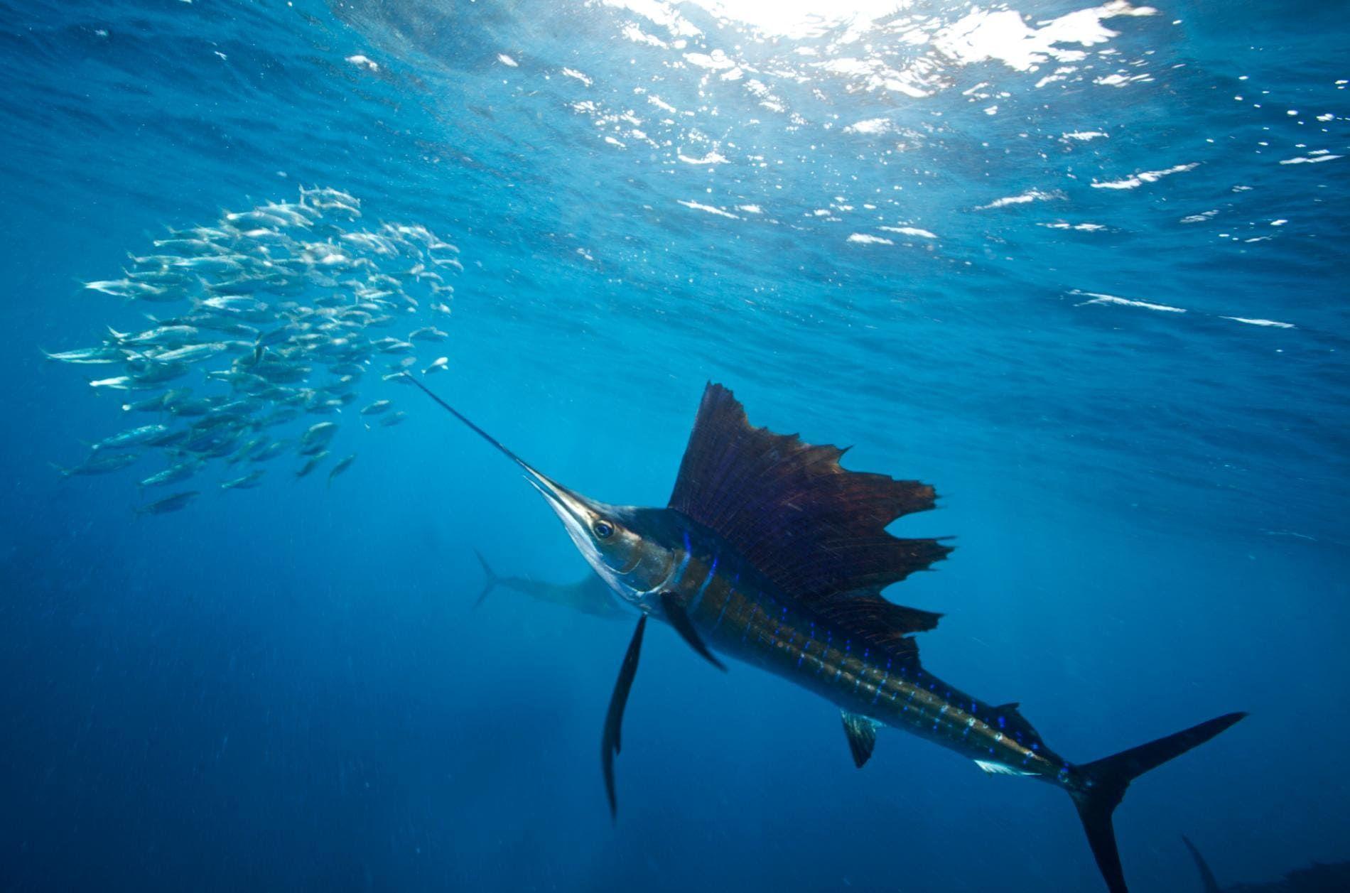 картинки про хищных рыб рецепт гнезда глухаря