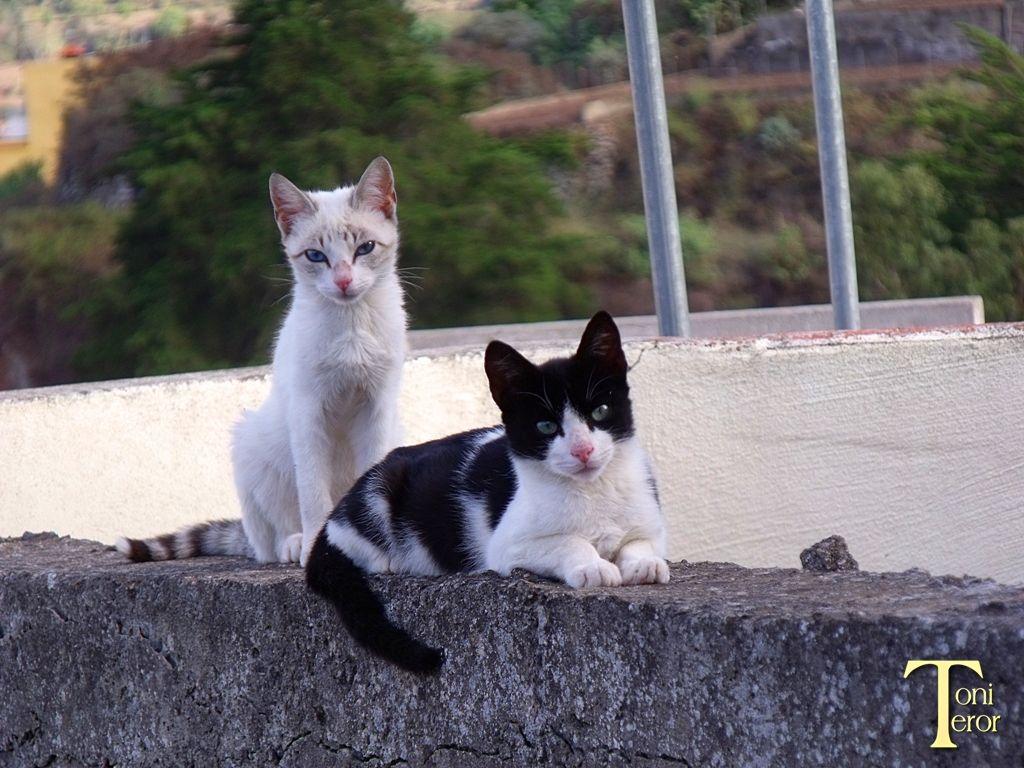 Gatitos sobre la pared 2 by ToniTeror.deviantart.com on @deviantART