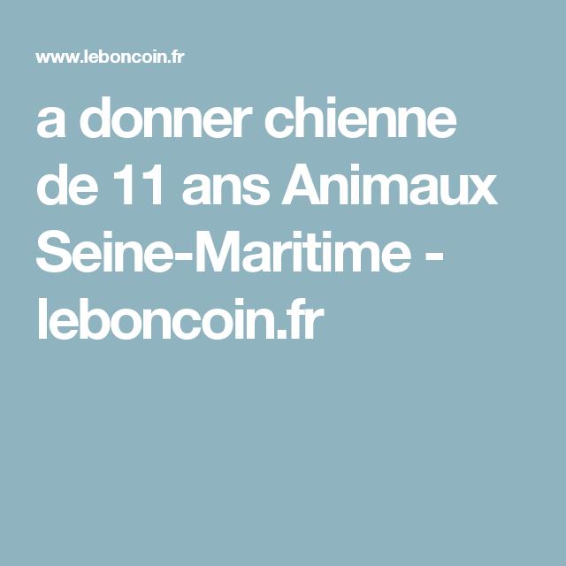 A Donner Chienne De 11 Ans Animaux Seine Maritime Leboncoin Fr Seine Maritime Chienne 11 Ans