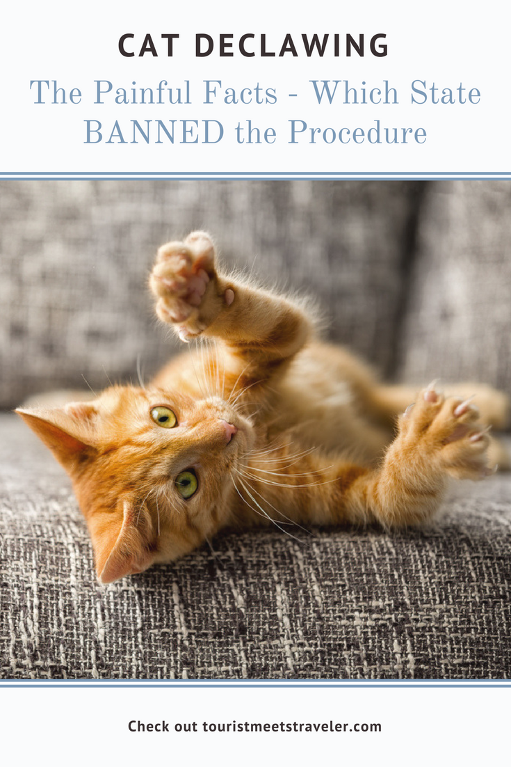 Cat Declawing The Painful Facts Including Which State Banned The Procedure Cats And Meows Cat Care Cats Kitten Care